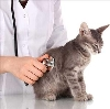 Ветеринарные клиники в Юрге